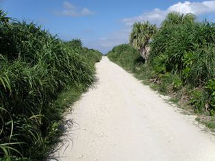 islandroad.jpg