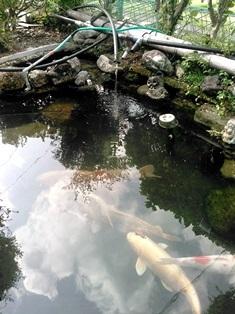 creekwater.jpg